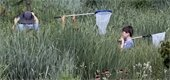 3 Kids collecting butterflies with nets in grass meadow