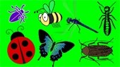 Crawl, Hop, or Fly to Bugfest 2018