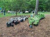 York Learning Garden Plant Sale