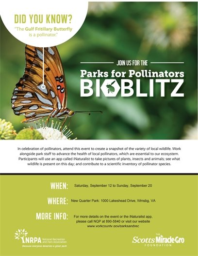 Join us for the Parks for Pollinators BioBlitz