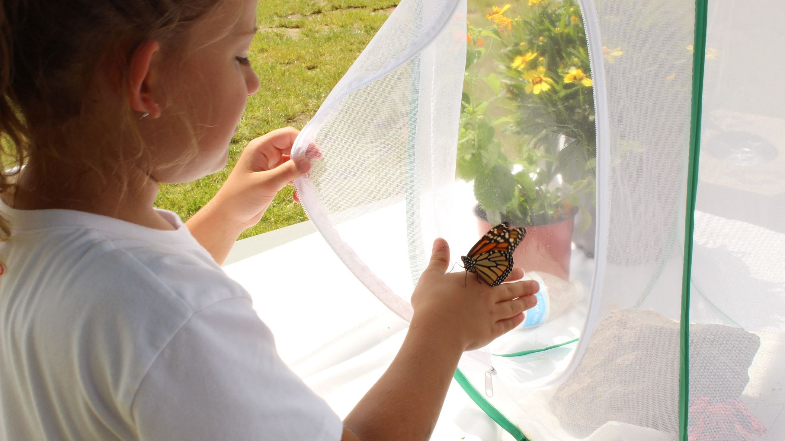 This is a picture of Butterfly Tagging/Yorktown Market